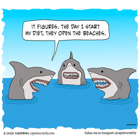 There goes the shark's diet plan