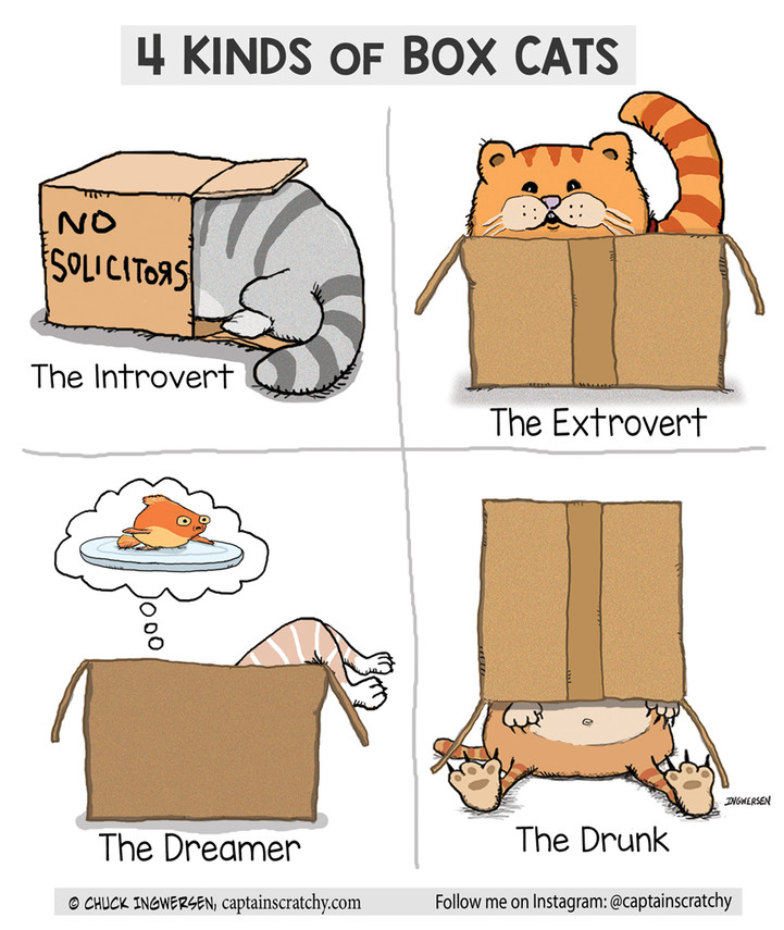 4 types of box cats