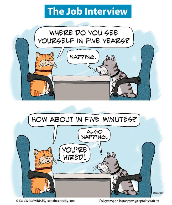 Cat aces the job interview