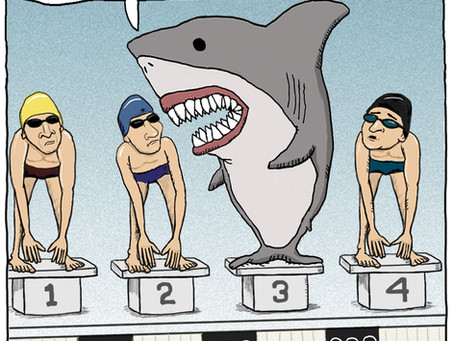 Olympic swimming with a shark