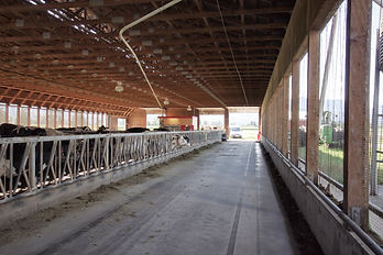 Autumn dairy barn interior