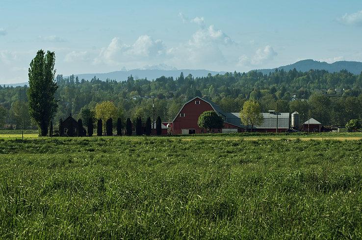 Matsqui dairy farm