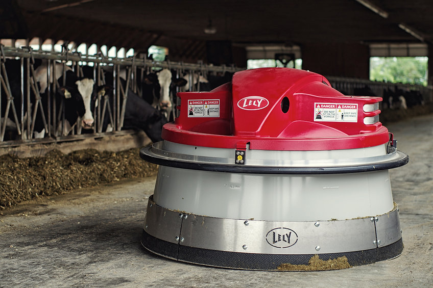 Lely Juno feed pusher with dairy cows