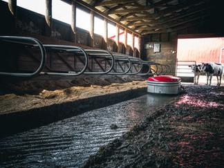 Nicomen Farm