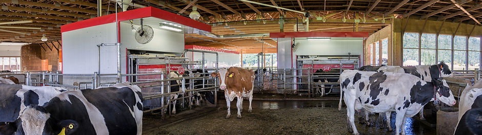 Dairy barn interior with lely robots and vector