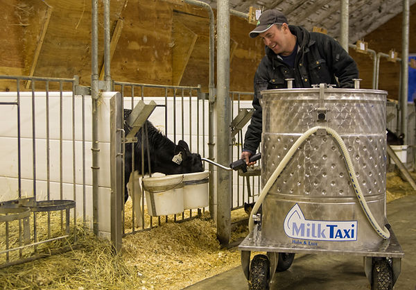 Holm and laue milk taxi being used to feed calves
