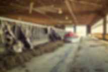 Dairy barn interior with Lely Juno 150