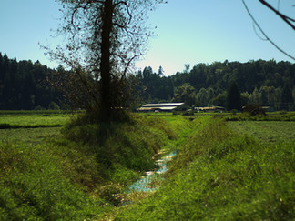 Ameret Farms