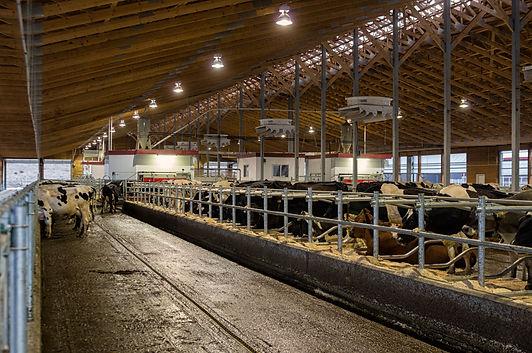 Bradner Robotic Dairy