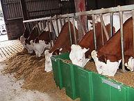 Cow feed bin