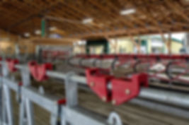 Dairy cows with Lely milking machines