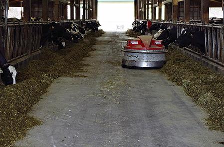 Rosegate dairy juno