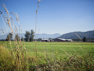 Fraser Edge Farms