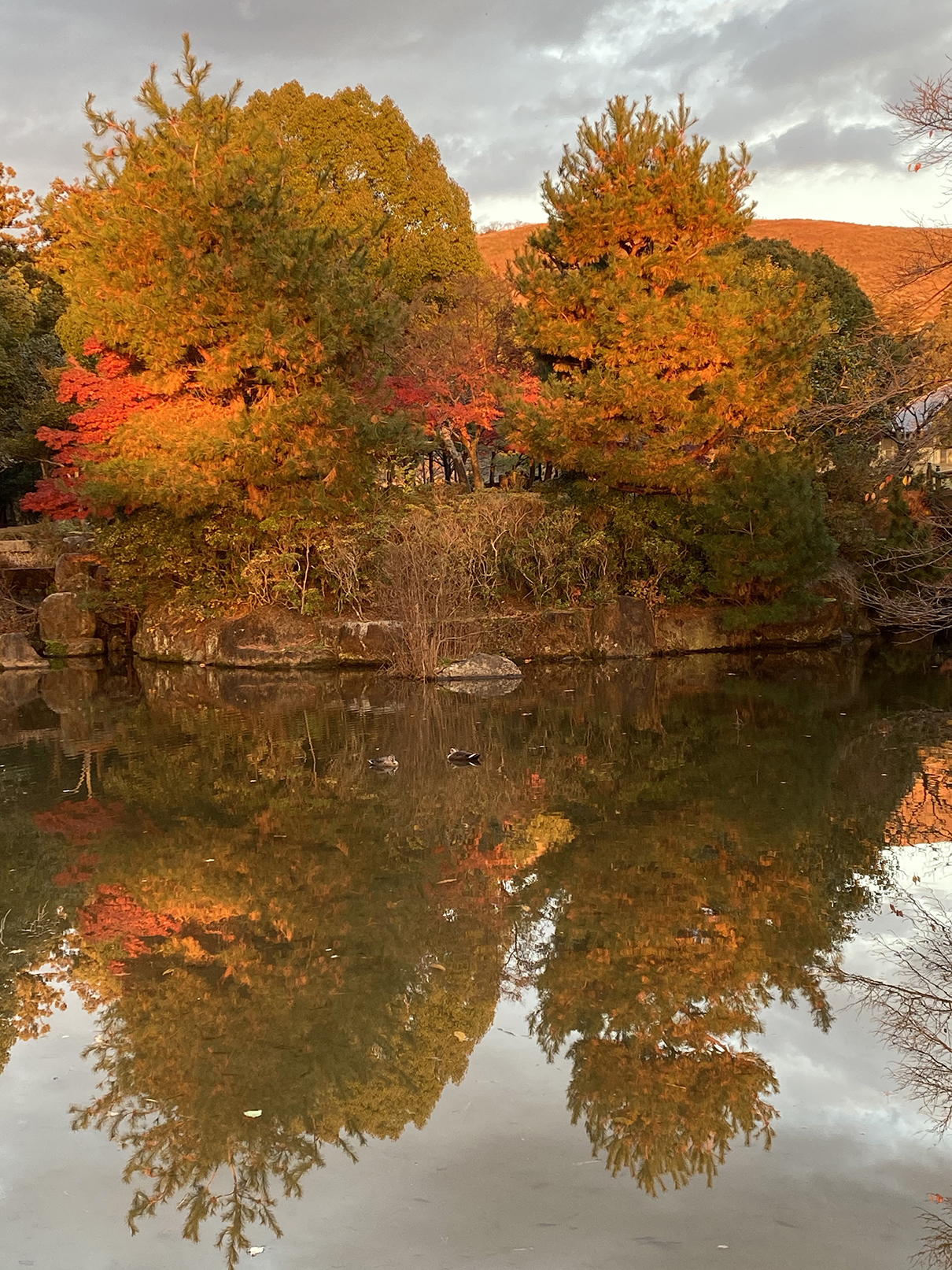 Nara Park Autumn Glory
