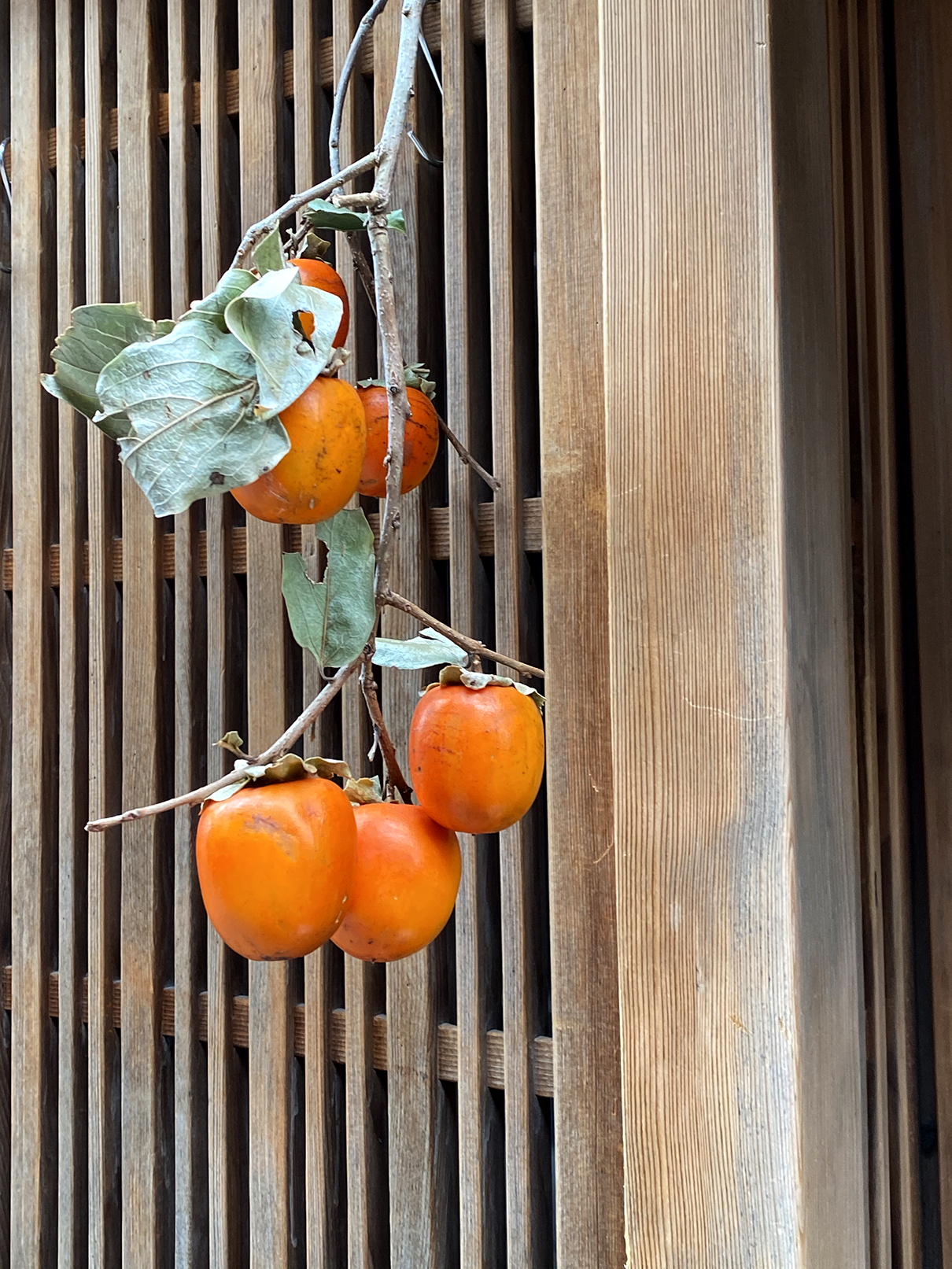 Persimmons, Kyoto