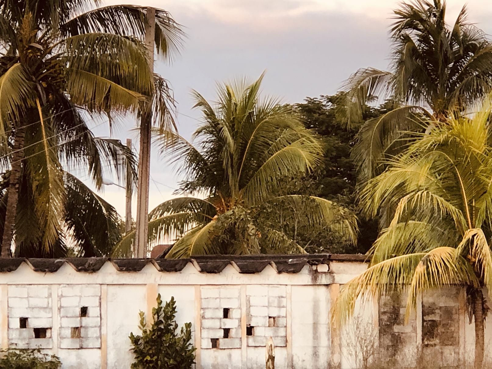 Havana Fade