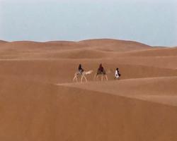 Saharan Caravan