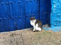 Cat, Rabat
