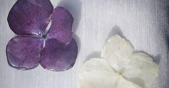 #hydrangeaflowers #realflowers.jpg