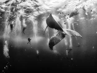 Conheça os Vencedores do Concurso Traveller Photo Contest 2015 da National Geographic