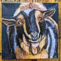 CQStudios Animal Portrait