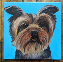 CQStudios Dog Portrait