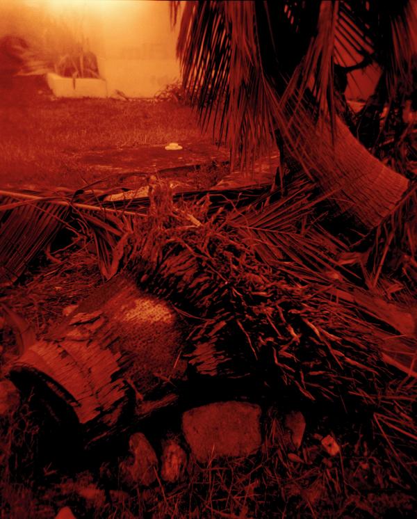 dead palms 2