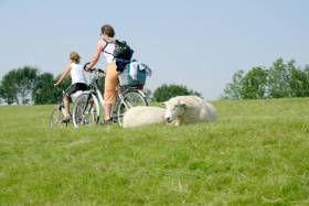 Fahrradfahrn in der Haseldorfer Marsch