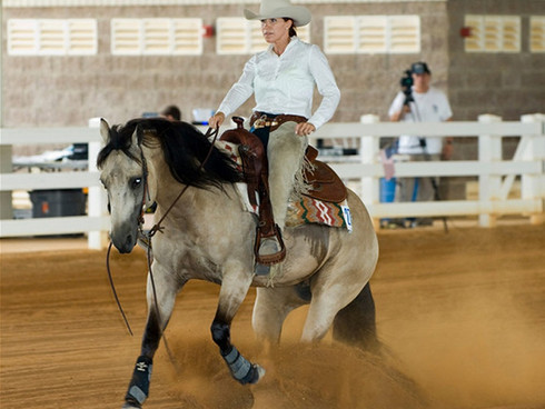 Reining trained horses are used in See Horse Miami's Equine Therapy