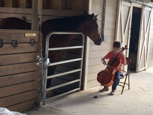 Boy Plays for Horse