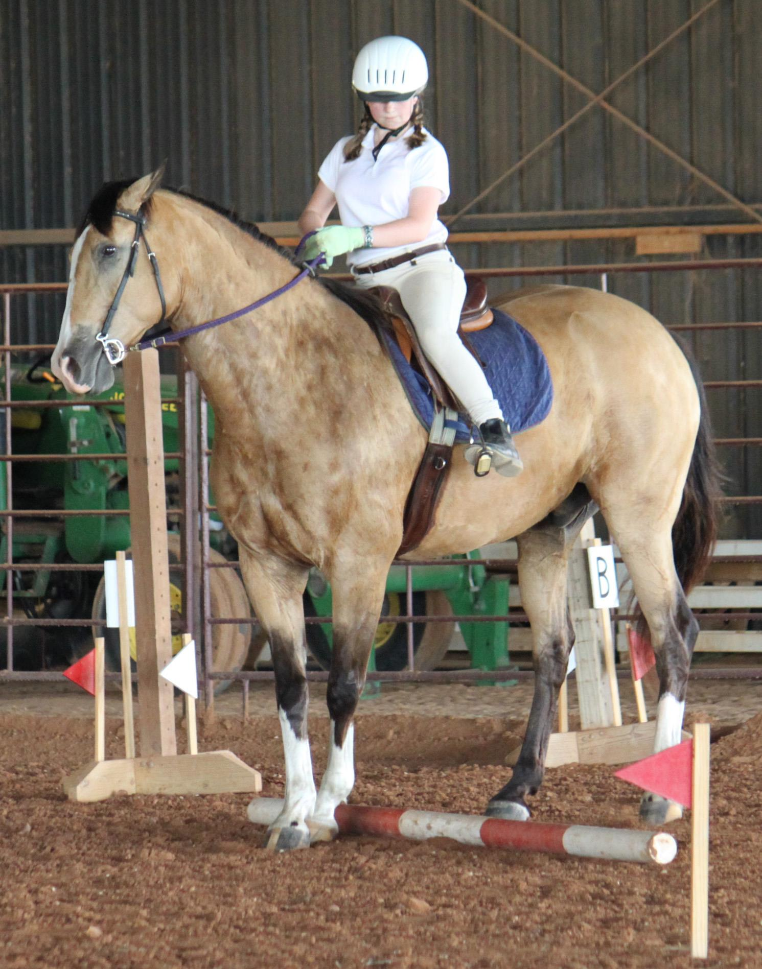 Working Equoitation Texas4.jpg