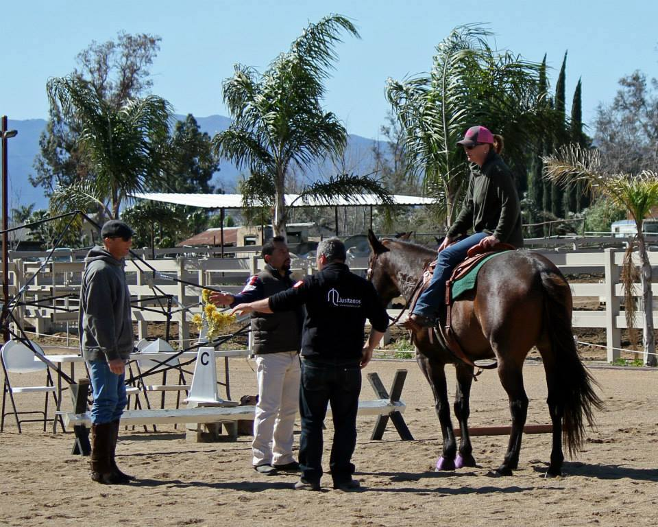 Working Equoitation California4.jpg