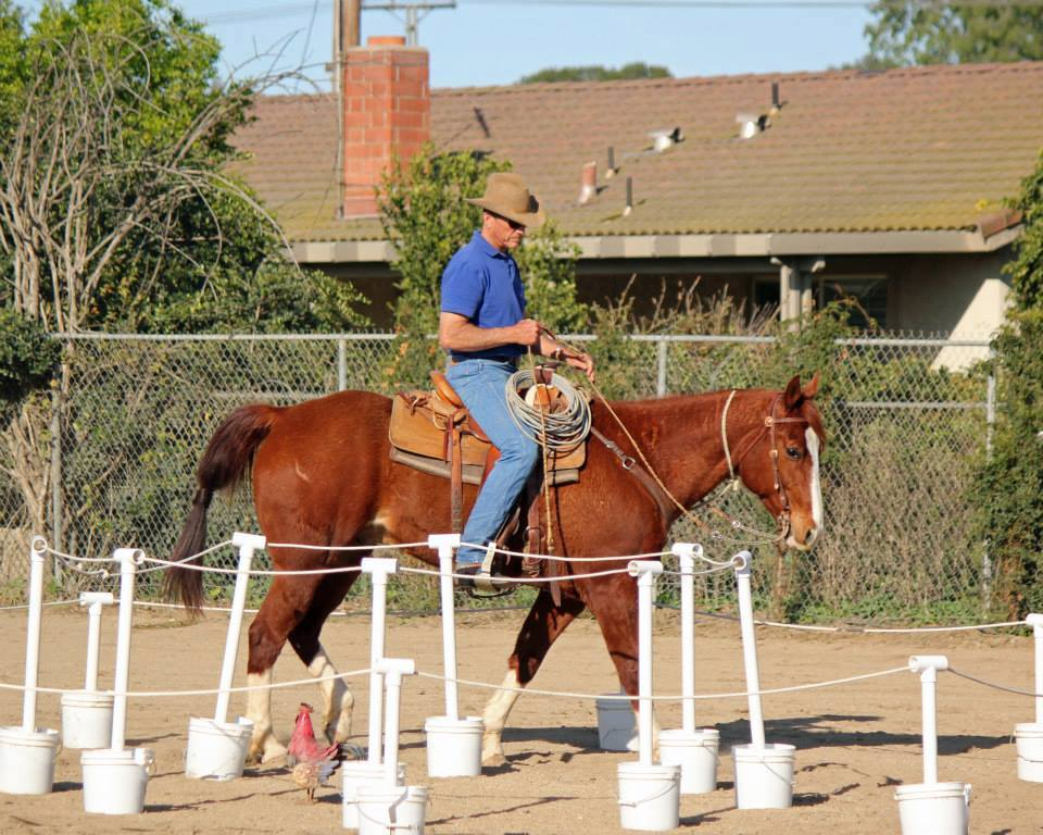 Working Equoitation California3.jpg
