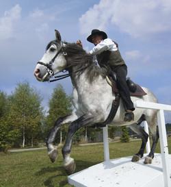 Working-Equitation-1.jpg