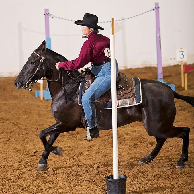 Working Equoitation Washington3.jpg