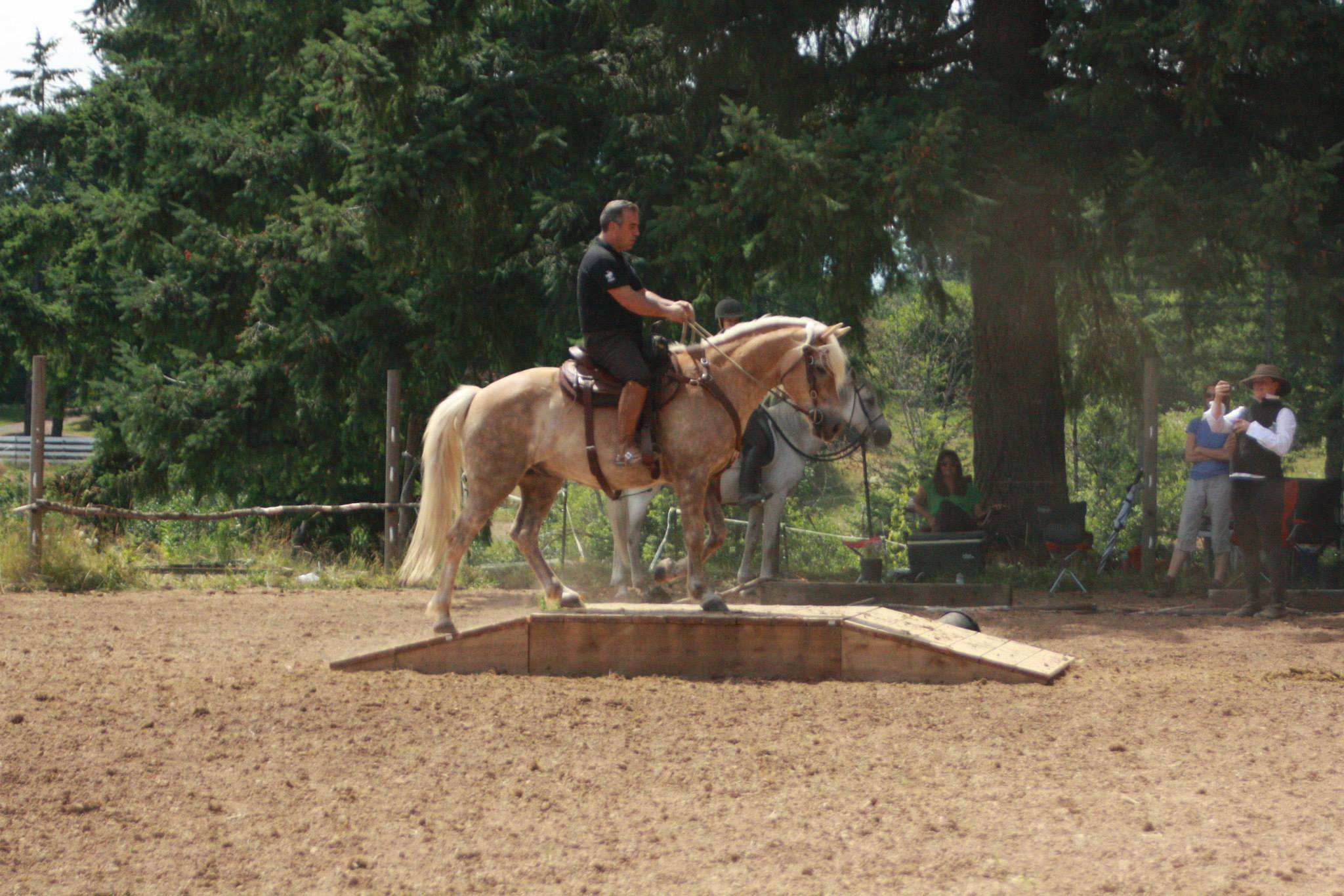 Working Equitation Florida2.jpg