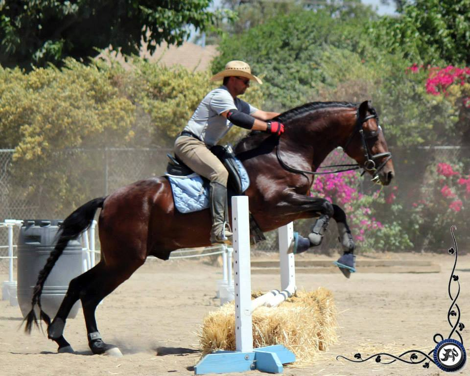 Working Equoitation California1.jpg