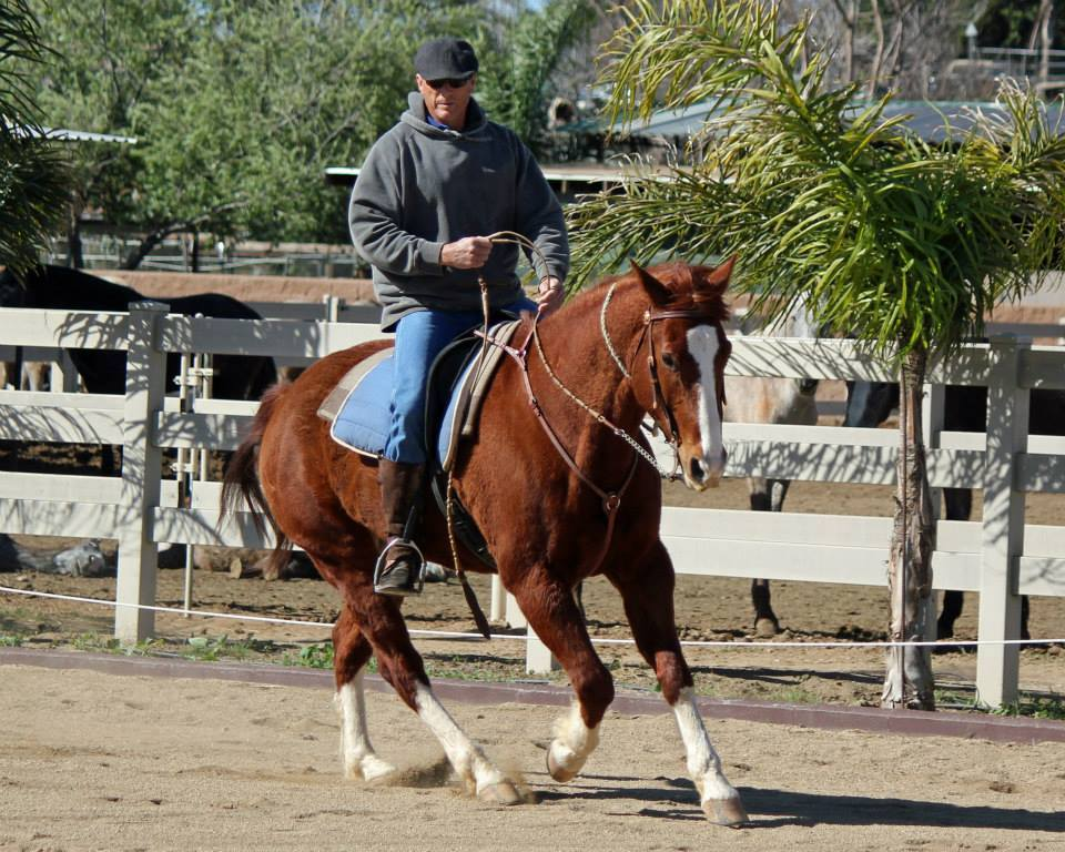 Working Equoitation California2.jpg