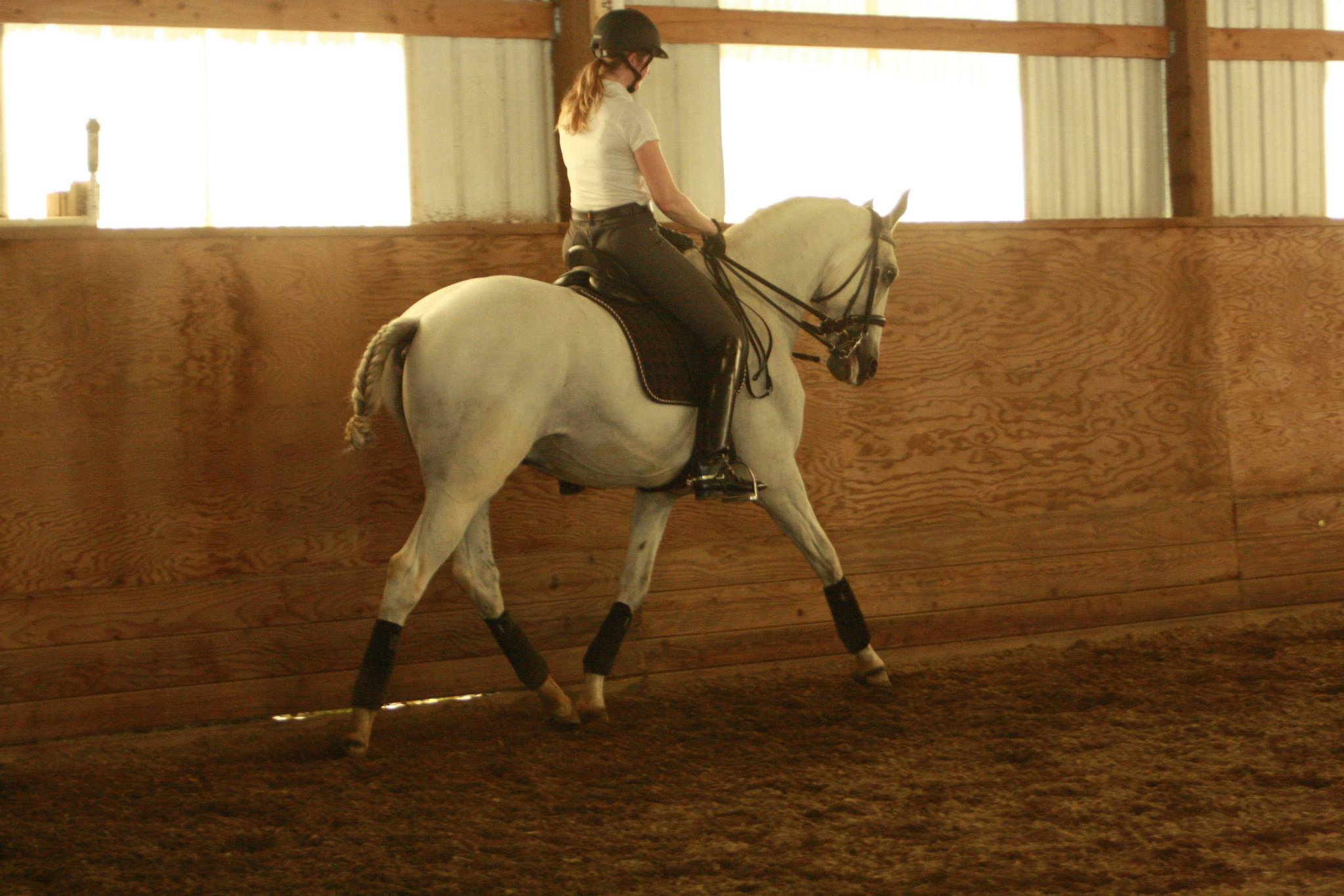 Working Equitation Florida4.jpg
