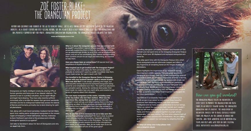 Portfolio - Orangutans.JPG