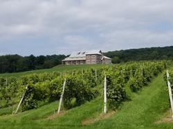 Spyglass Ridge Winery Vineyard