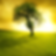 Tree%20Background%20Cut.png