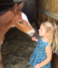 Paardrijlessen voor iedereen