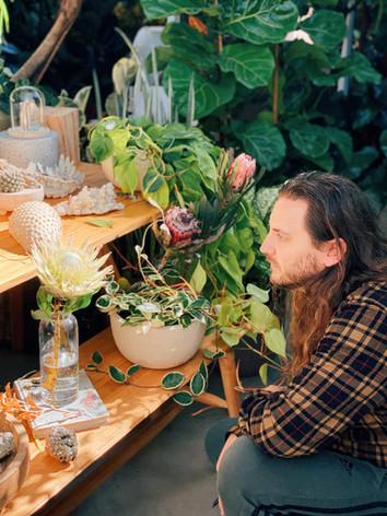 Elfo Jotta observando a força da Protea cynaroides branca