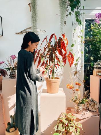 Elfa Carol e o fantástico caso da Begonia maculata gigante