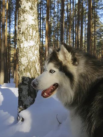 Mr. Джек в любимом лесу