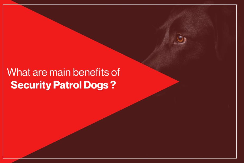 Security-Patrol-Dogs