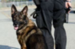 a k9 officer with his partner during the