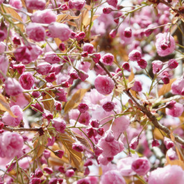 Frühling #inspiration
