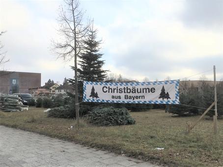 ドイツで飾る「もみのき」のこと